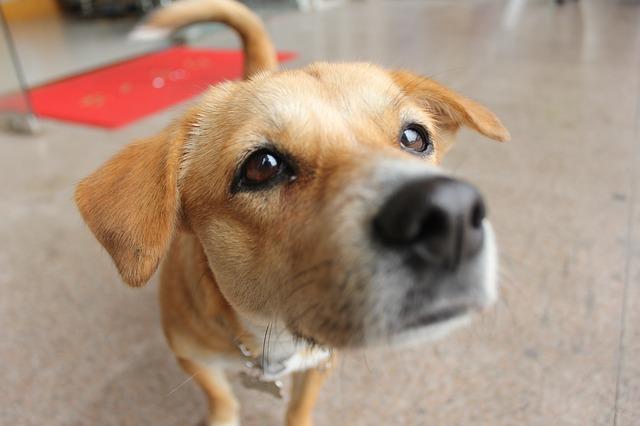pet-dog-629400_640