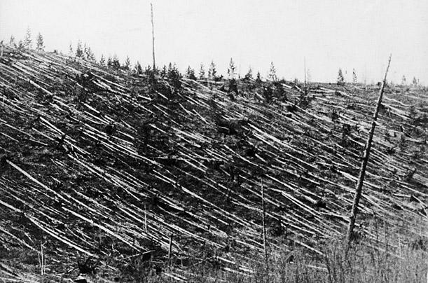 Les-arbres-couchés-par-lexplosion-dun-météore-au-dessus-de-la-Toungouska-en-1908.1