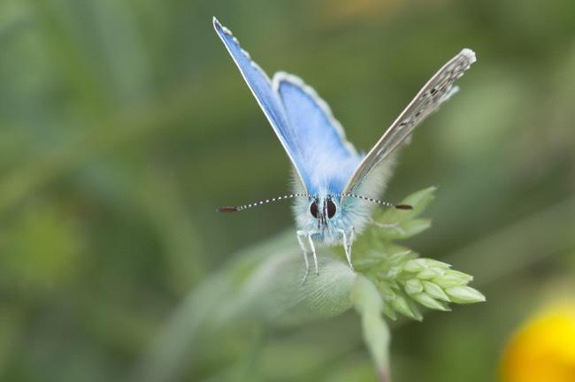 papillons-photo-macro-beaute-7