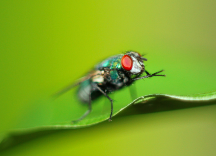 Pourquoi les mouches se frottent elles les pattes le savais tu - Pourquoi les mouches piquent ...