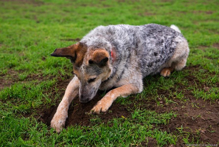 Pourquoi les chiens creusent ils des trous et quelles sont les solutions pour y rem dier - Quelles sont les plantes que l on peut bouturer ...