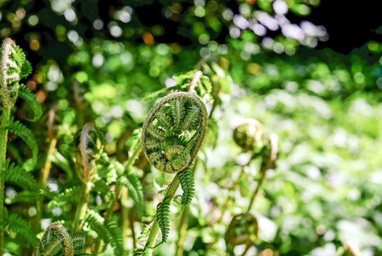 Les plantes peuvent communiquer entre elles le savais tu - Association plantes aromatiques entre elles ...
