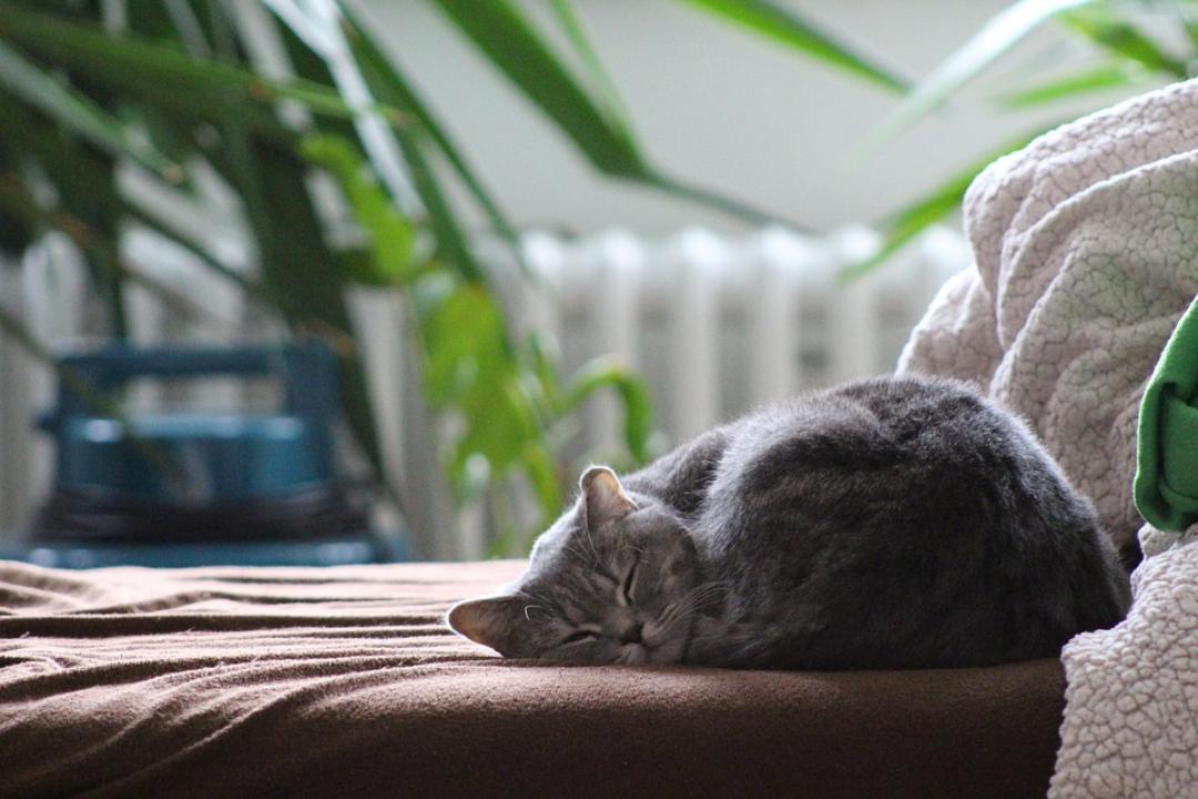 """Résultat de recherche d'images pour """"chat qui dort debout"""""""