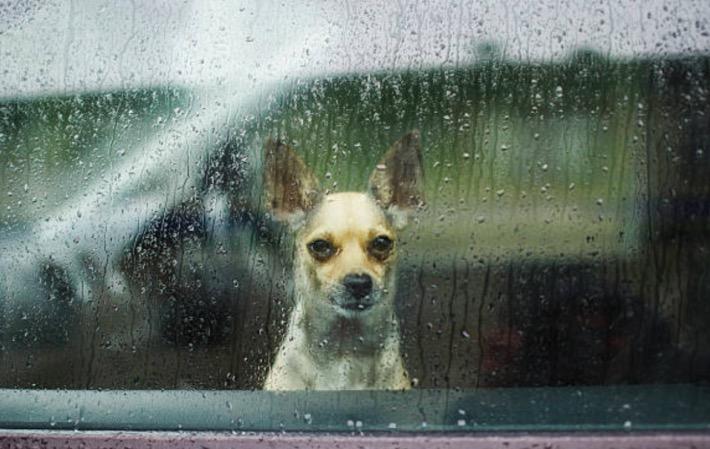chien animal suicide