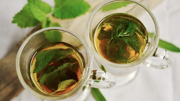 phytothérapie plantes thé