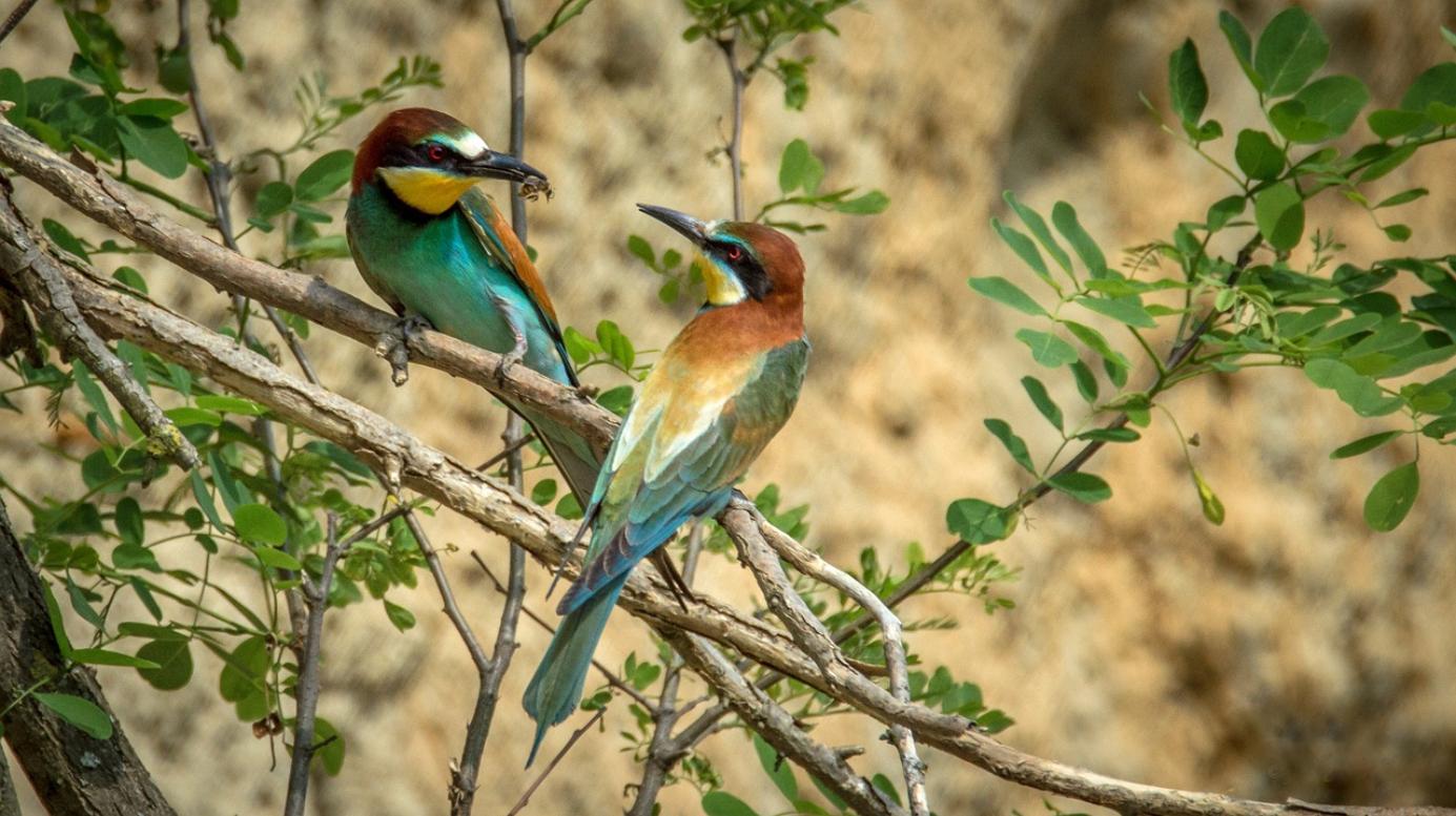 oiseaux insecte