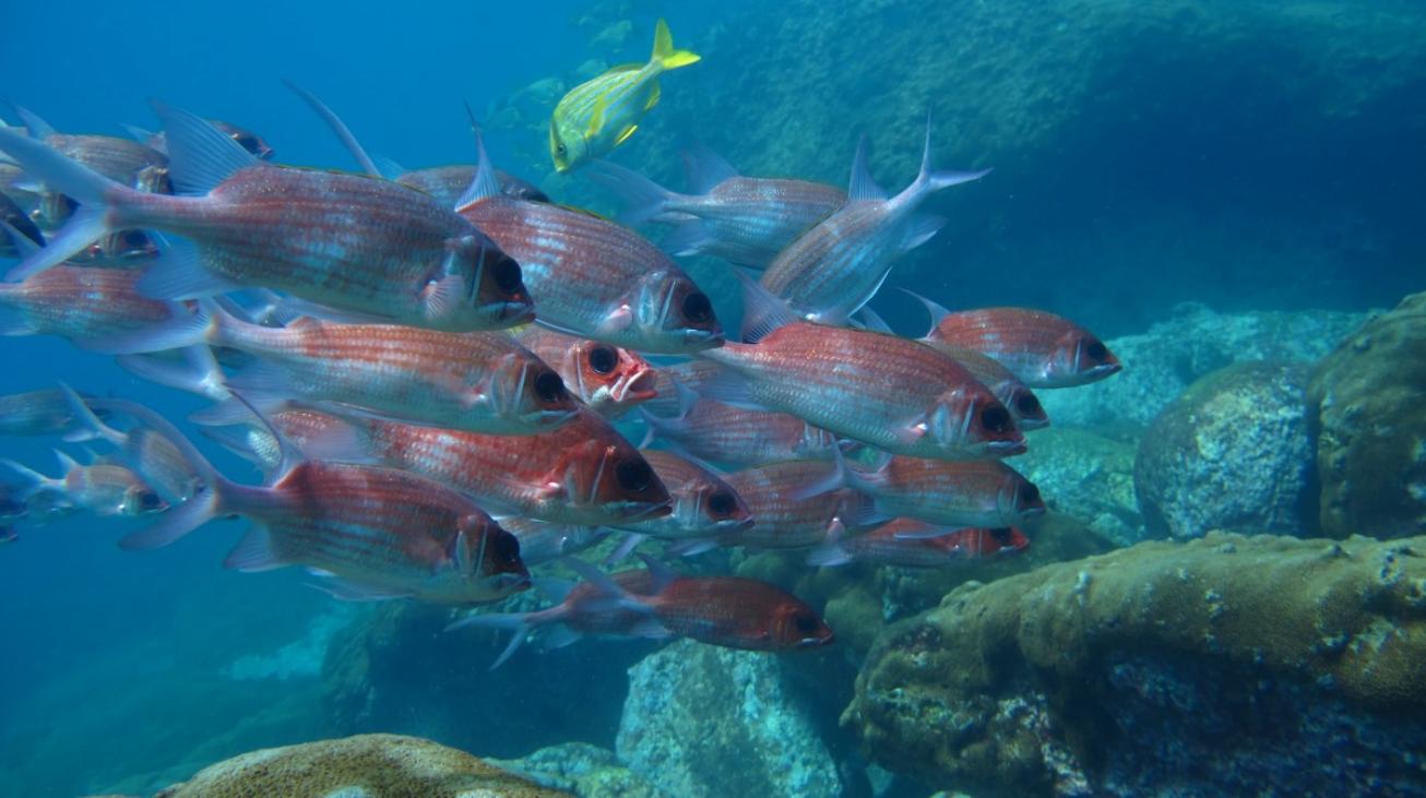poissons sous l eau