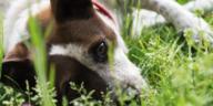 chien jardin creuse trou dans le jardin