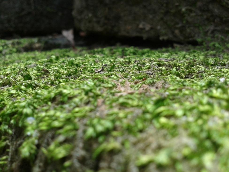 mousse roche pierre