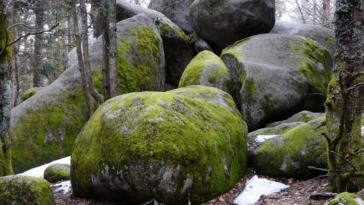 pierre qui roule n'amasse pas mousse