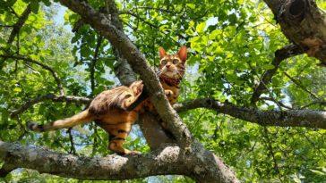 chat hauteur chute