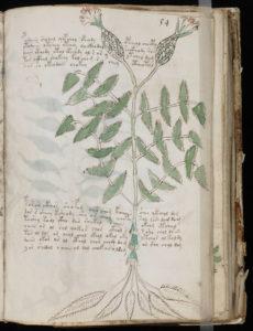 Manuscrit de Voynich