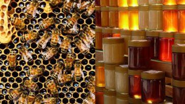 miel abeille ruche