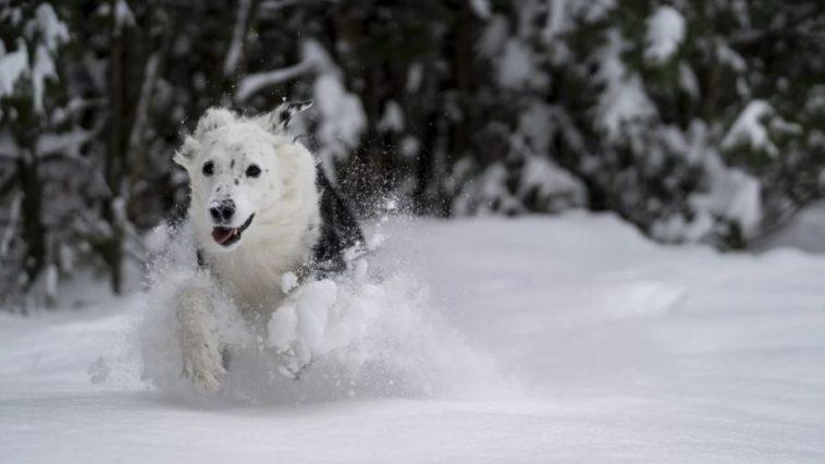 chien neige hiver