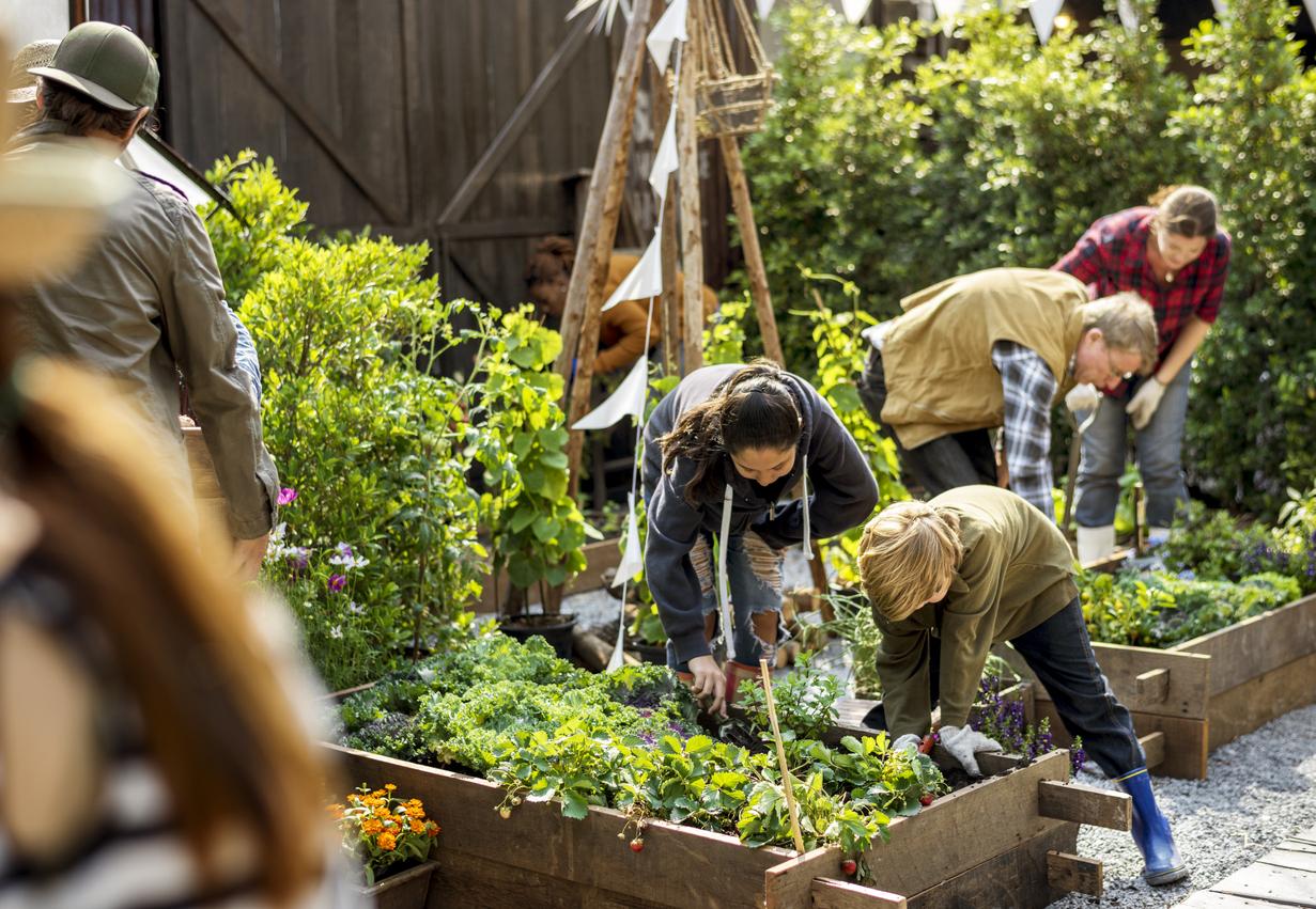 jardin cultiver potager